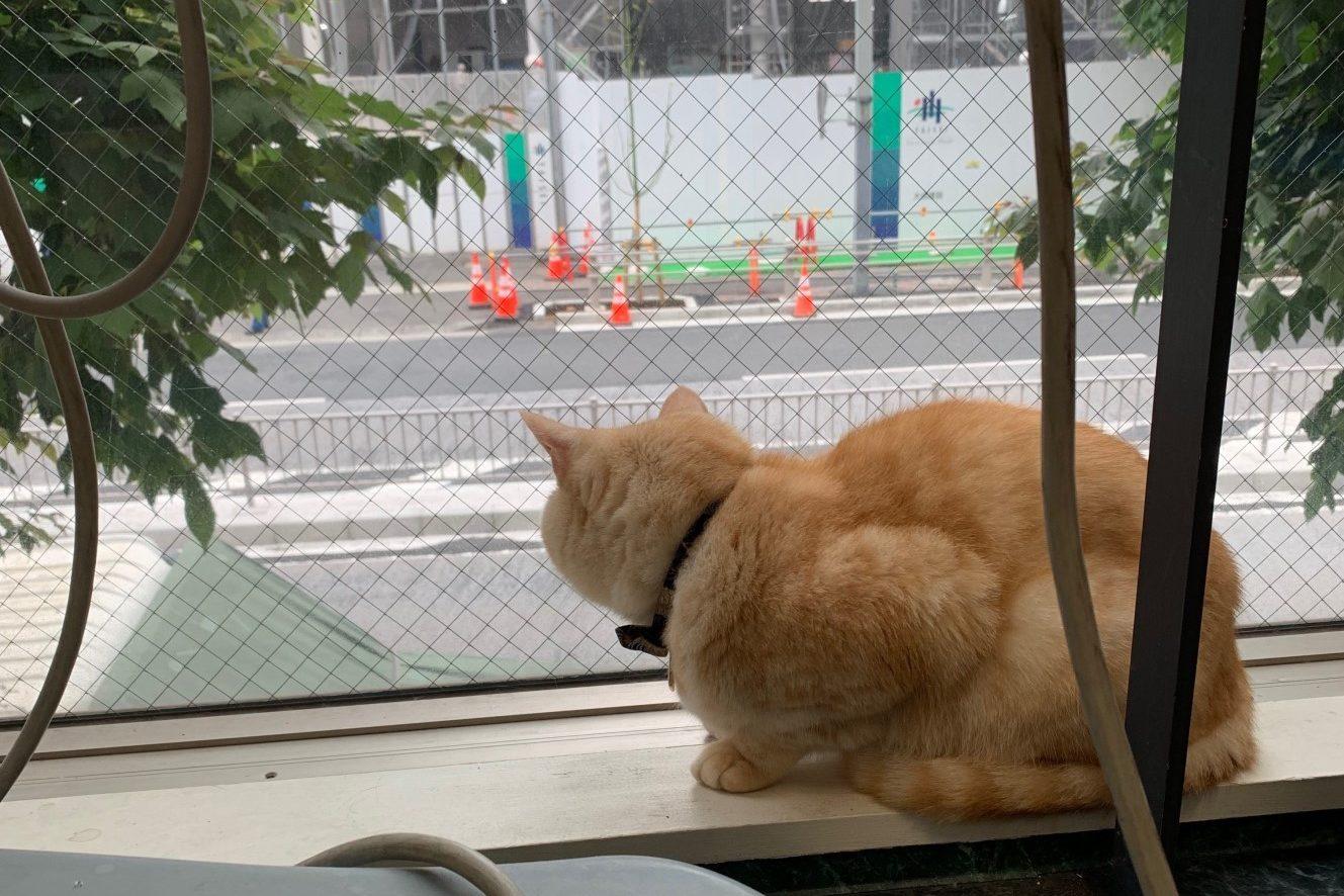 キャットホスピタル  (CAT HOSPITAL)